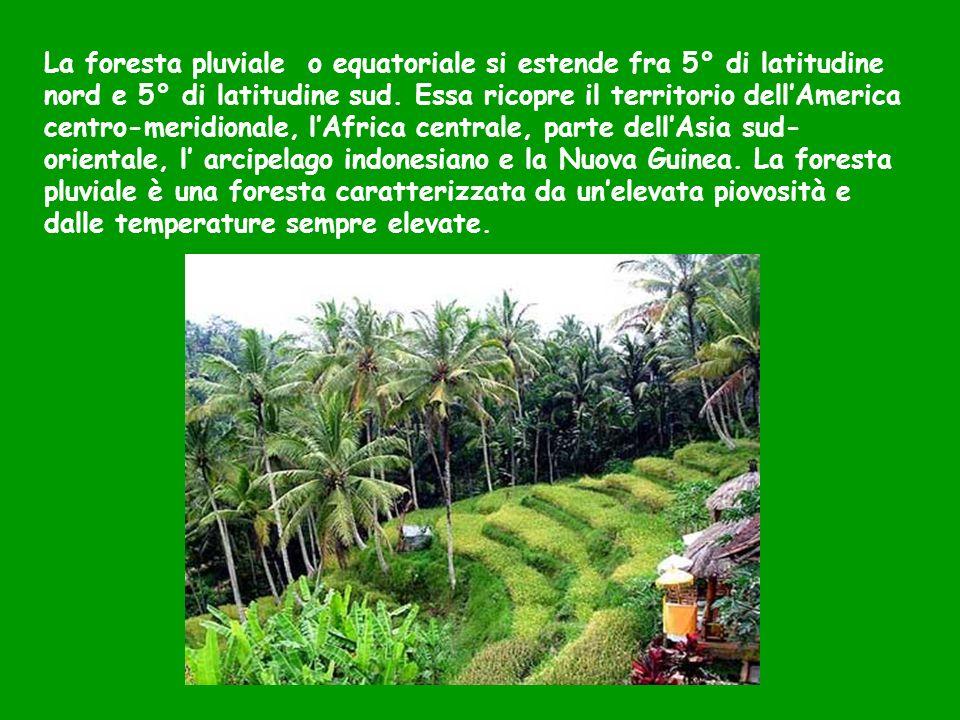 La foresta pluviale o equatoriale si estende fra 5° di latitudine nord e 5° di latitudine sud.