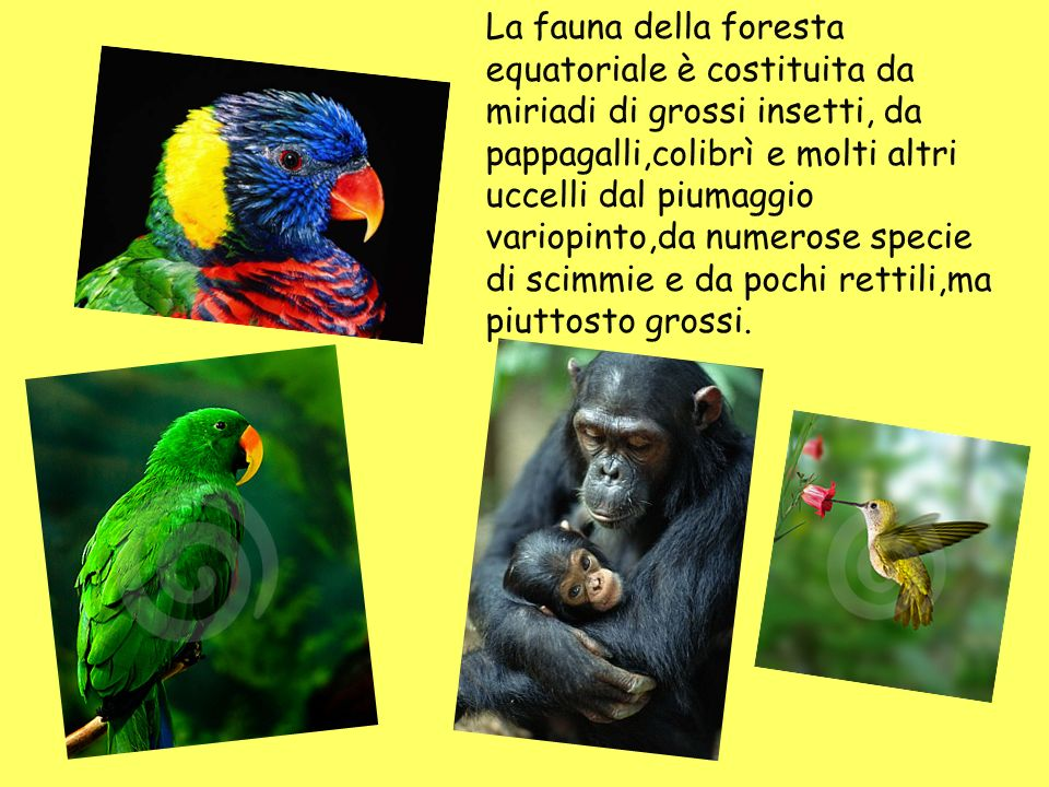 Clima tropicale umido ppt video online scaricare - Gli animali della foresta pluviale di daintree ...
