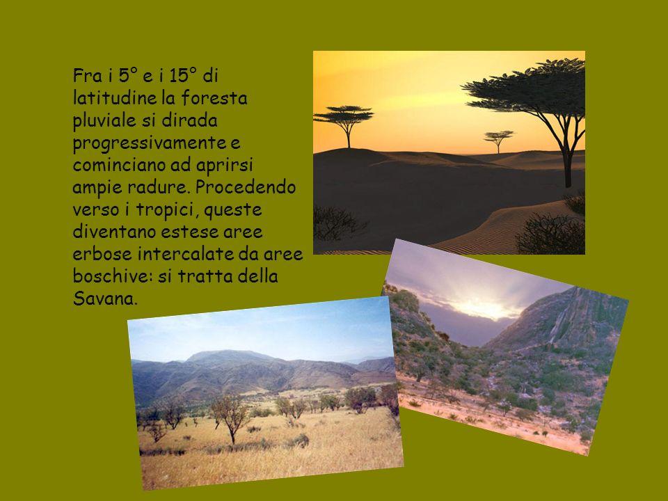 Fra i 5° e i 15° di latitudine la foresta pluviale si dirada progressivamente e cominciano ad aprirsi ampie radure.