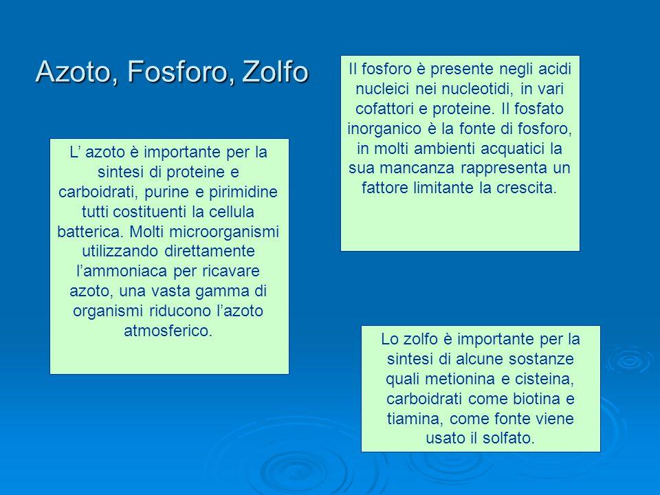 Azoto, Fosforo, Zolfo