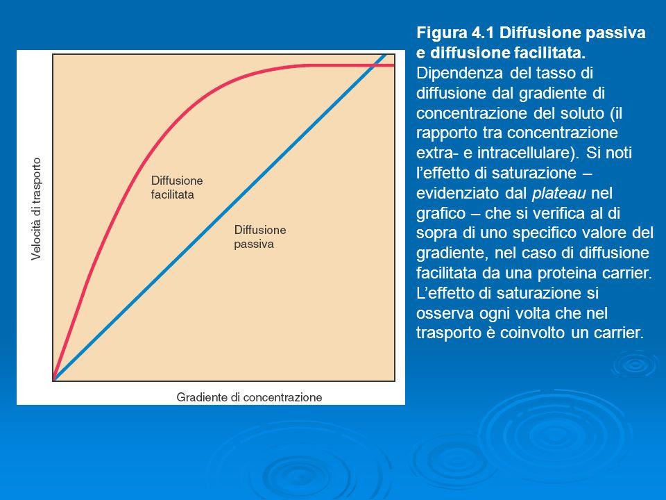 Figura 4. 1 Diffusione passiva e diffusione facilitata
