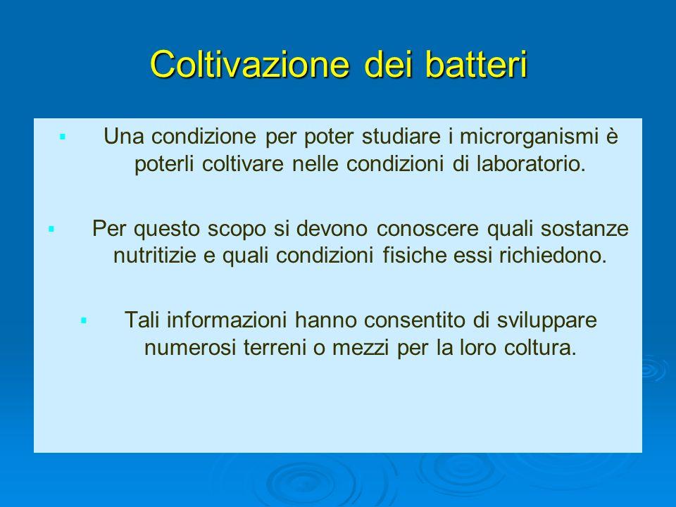 Coltivazione dei batteri