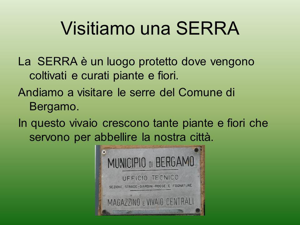 Visitiamo una SERRA La SERRA è un luogo protetto dove vengono coltivati e curati piante e fiori. Andiamo a visitare le serre del Comune di Bergamo.