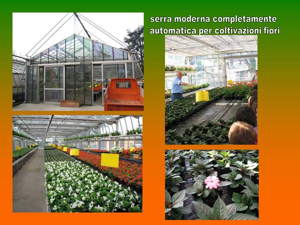 serra moderna completamente automatica per coltivazioni fiori