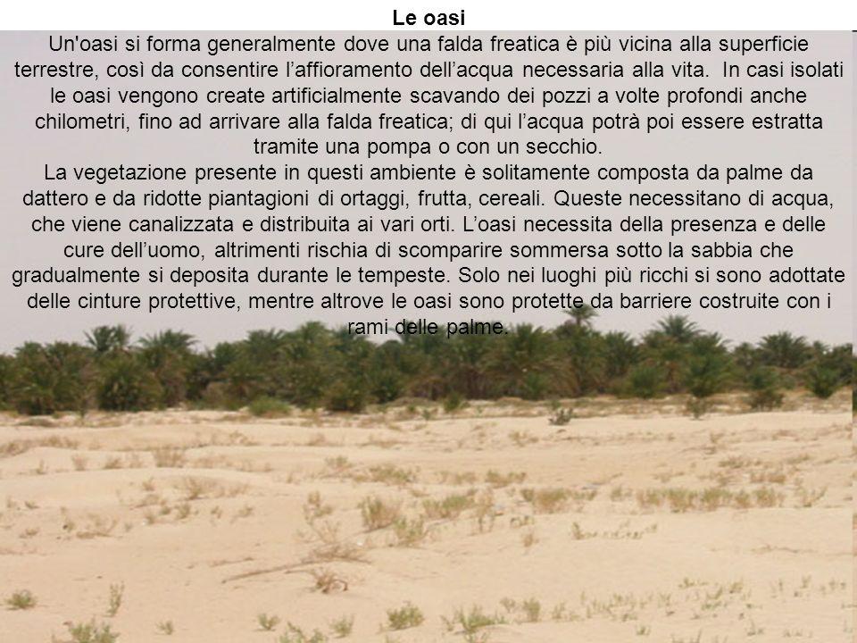 Le oasi