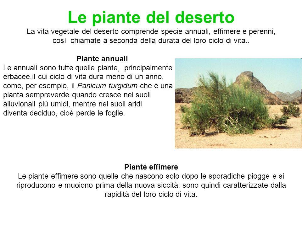 Le piante del deserto