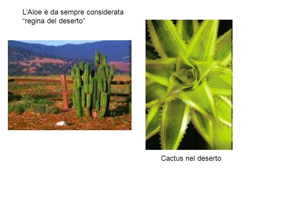 L'Aloe è da sempre considerata regina del deserto