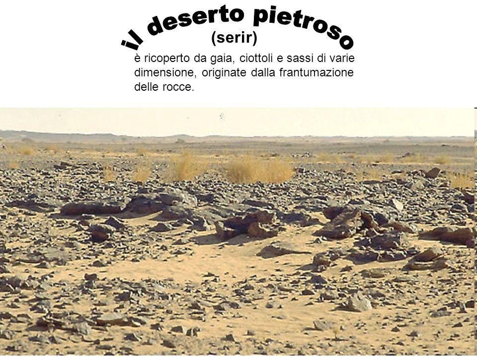 il deserto pietroso (serir)