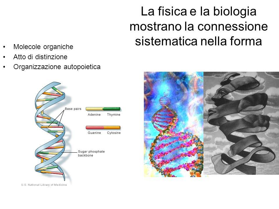 La fisica e la biologia mostrano la connessione sistematica nella forma