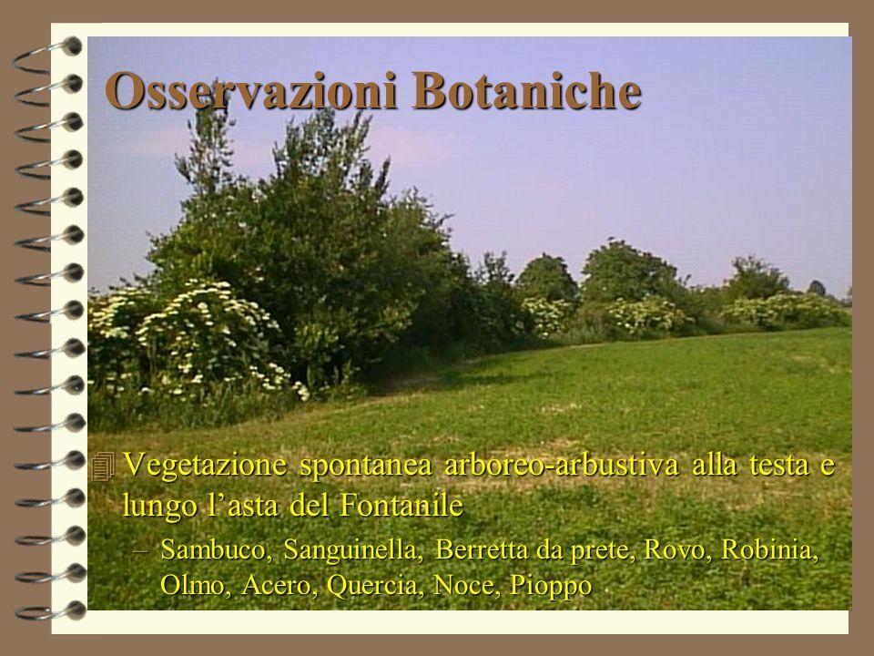 Osservazioni Botaniche