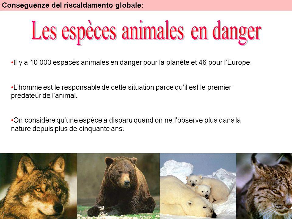 Les espèces animales en danger