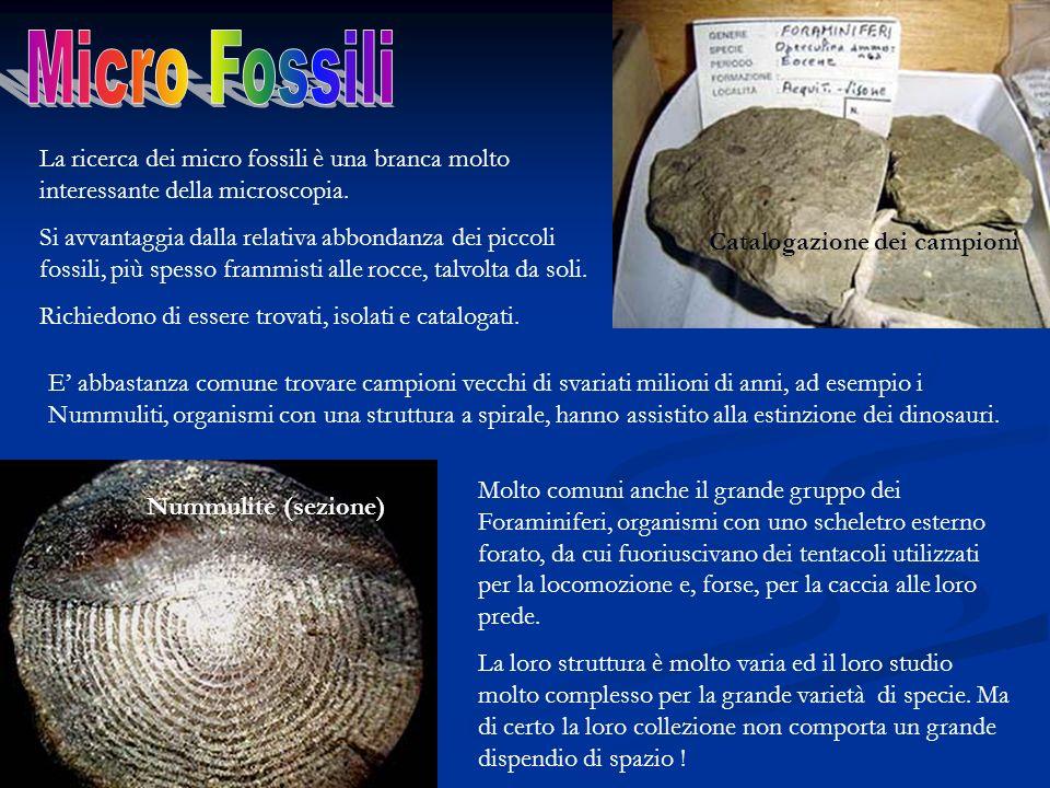 Micro Fossili La ricerca dei micro fossili è una branca molto interessante della microscopia.