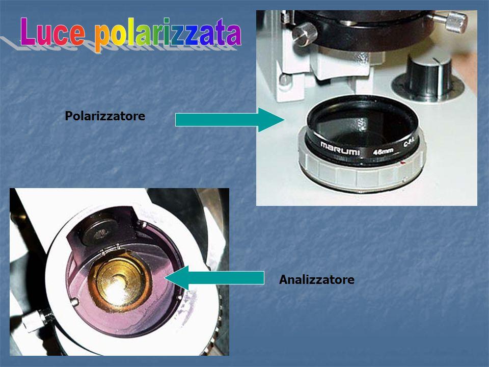 Luce polarizzata Polarizzatore Analizzatore