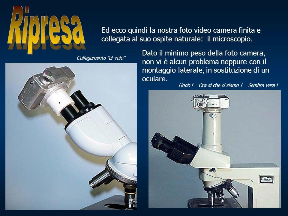 Ripresa Ed ecco quindi la nostra foto video camera finita e collegata al suo ospite naturale: il microscopio.
