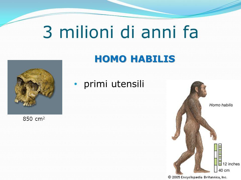 3 milioni di anni fa HOMO HABILIS primi utensili 850 cm2