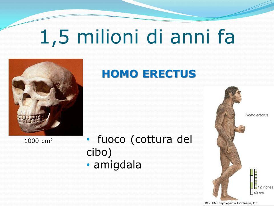 1,5 milioni di anni fa HOMO ERECTUS fuoco (cottura del cibo) amìgdala