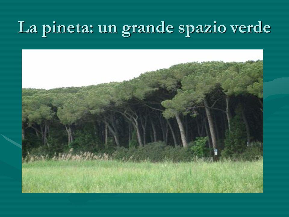 La pineta: un grande spazio verde