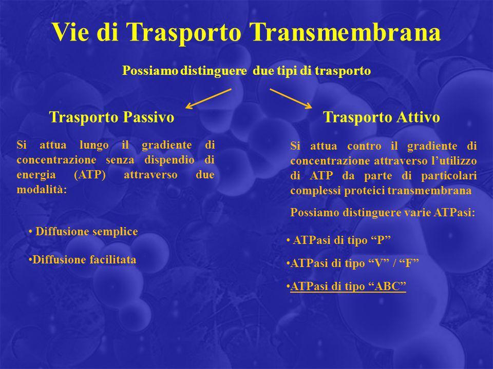 Vie di Trasporto Transmembrana
