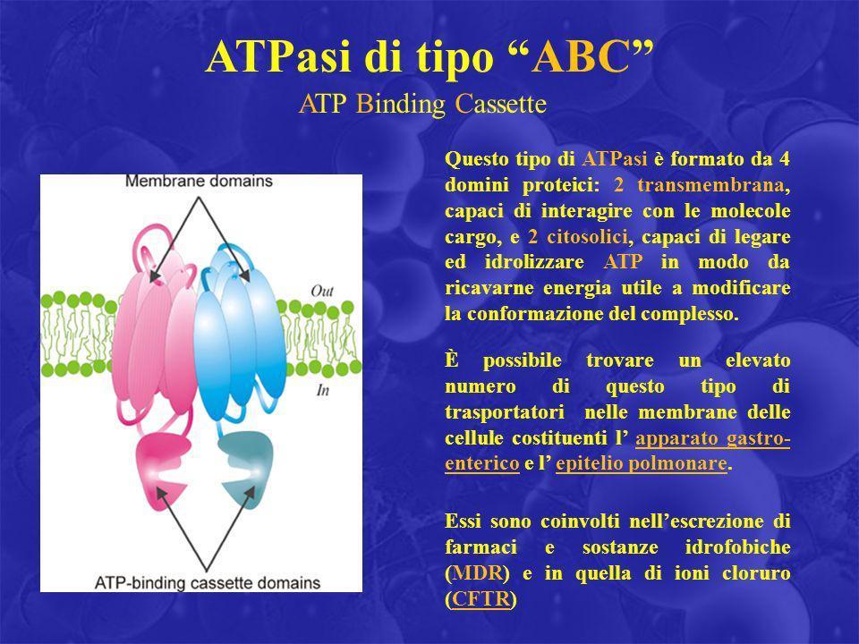 ATPasi di tipo ABC ATP Binding Cassette