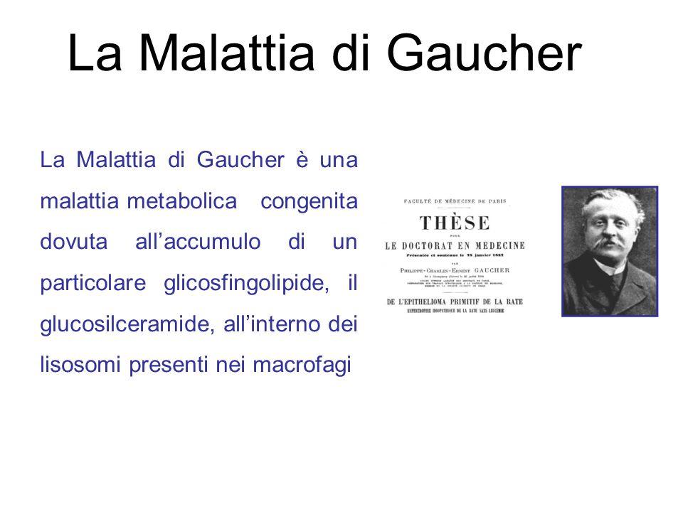 La Malattia di Gaucher
