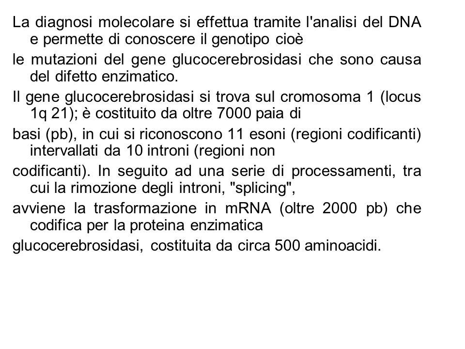 La diagnosi molecolare si effettua tramite l analisi del DNA e permette di conoscere il genotipo cioè