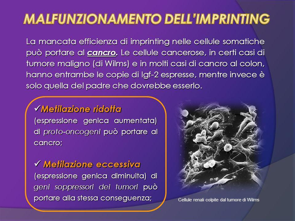 MALFUNZIONAMENTO DELL'IMPRINTING