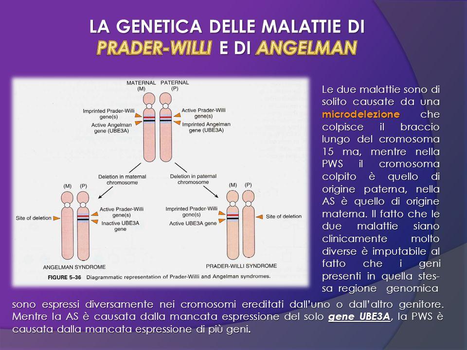 LA GENETICA DELLE MALATTIE DI PRADER-WILLI E DI ANGELMAN