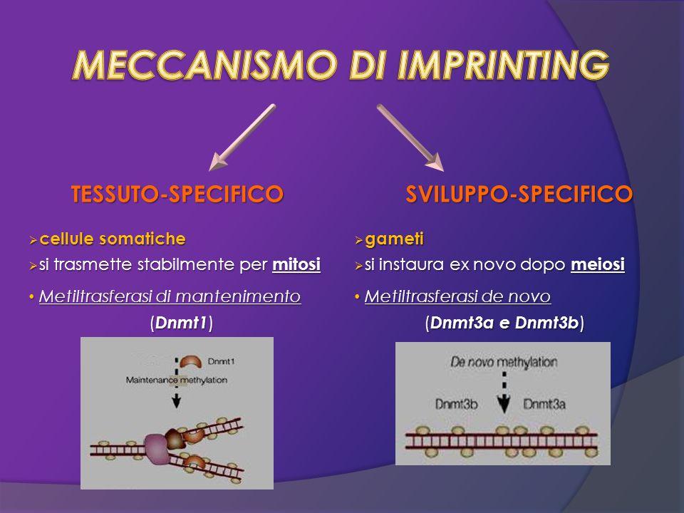 MECCANISMO DI IMPRINTING