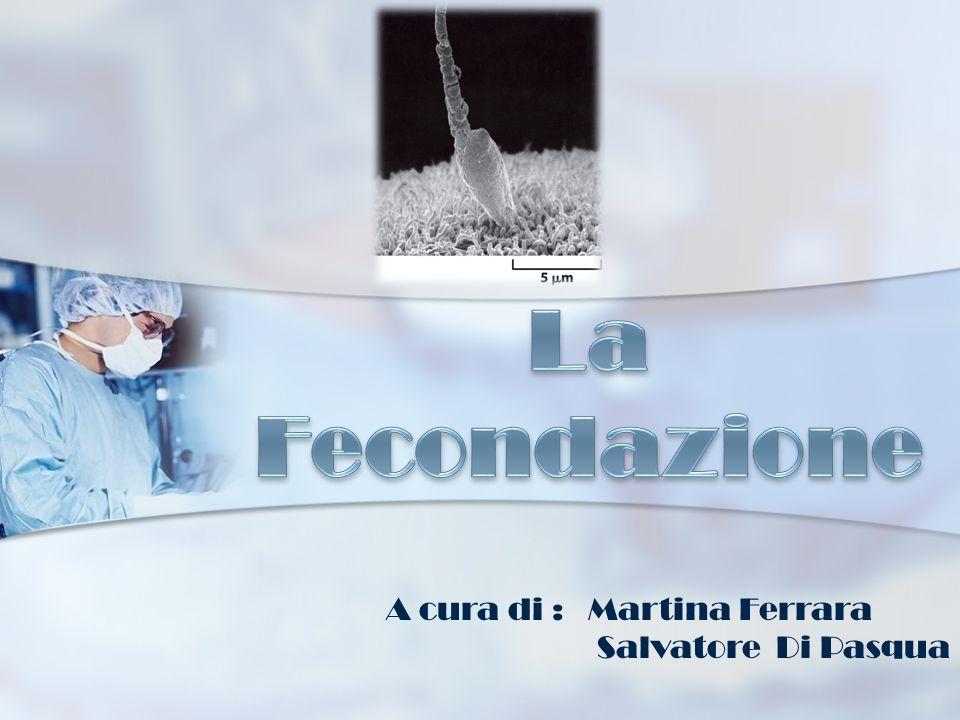 La Fecondazione A cura di : Martina Ferrara Salvatore Di Pasqua
