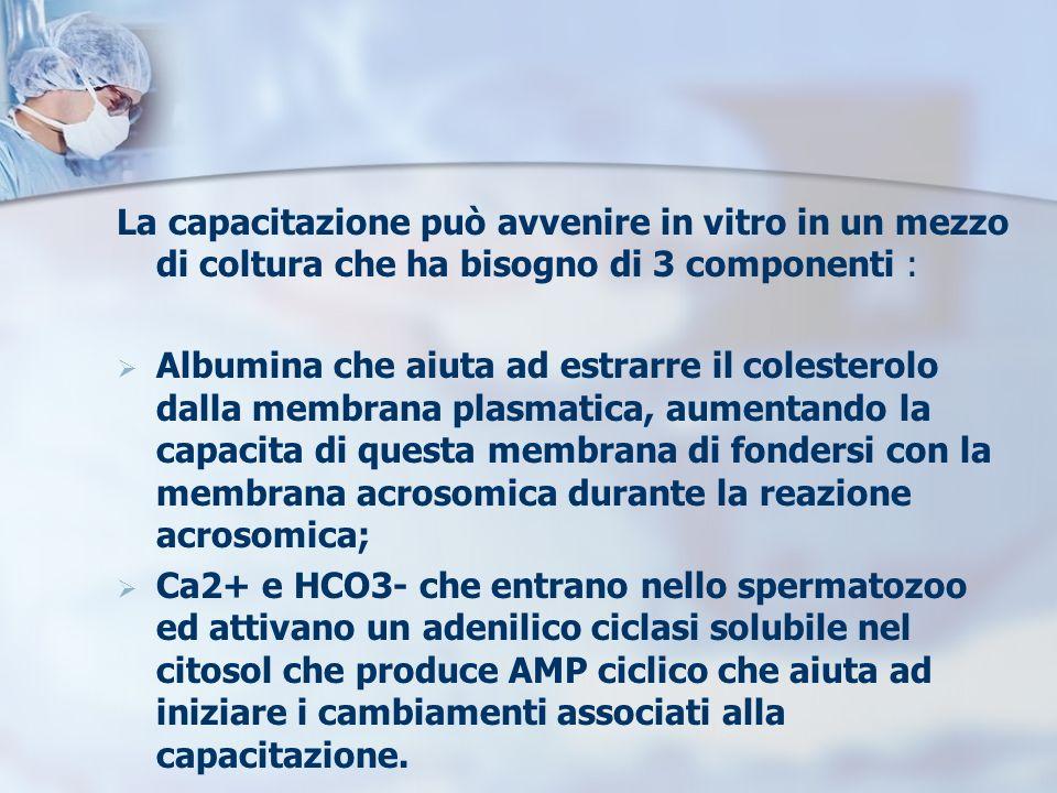 La capacitazione può avvenire in vitro in un mezzo di coltura che ha bisogno di 3 componenti :