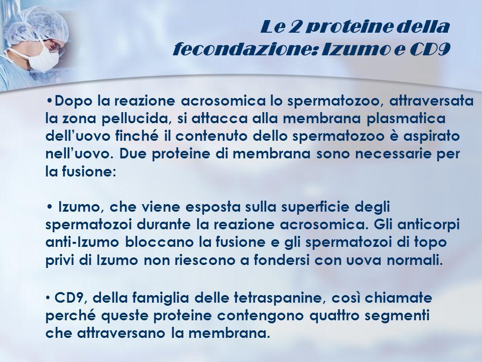 fecondazione: Izumo e CD9