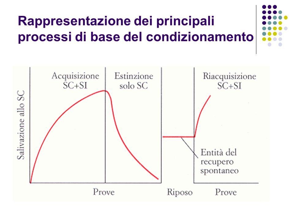 Rappresentazione dei principali processi di base del condizionamento