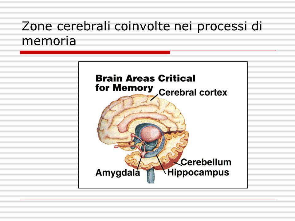 Zone cerebrali coinvolte nei processi di memoria