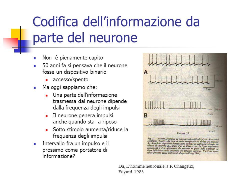 Codifica dell'informazione da parte del neurone