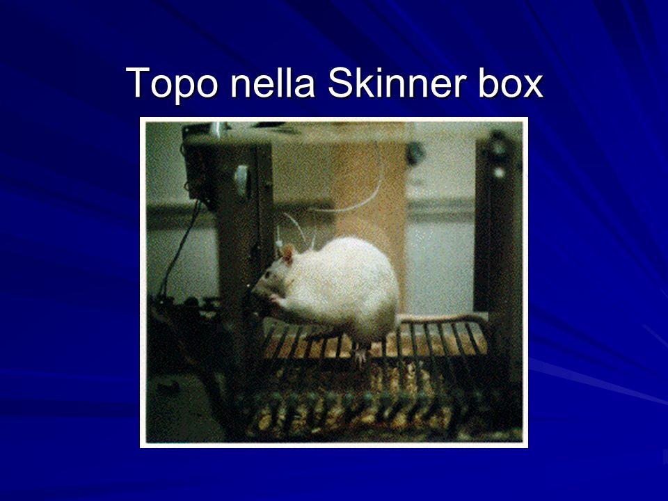 Topo nella Skinner box