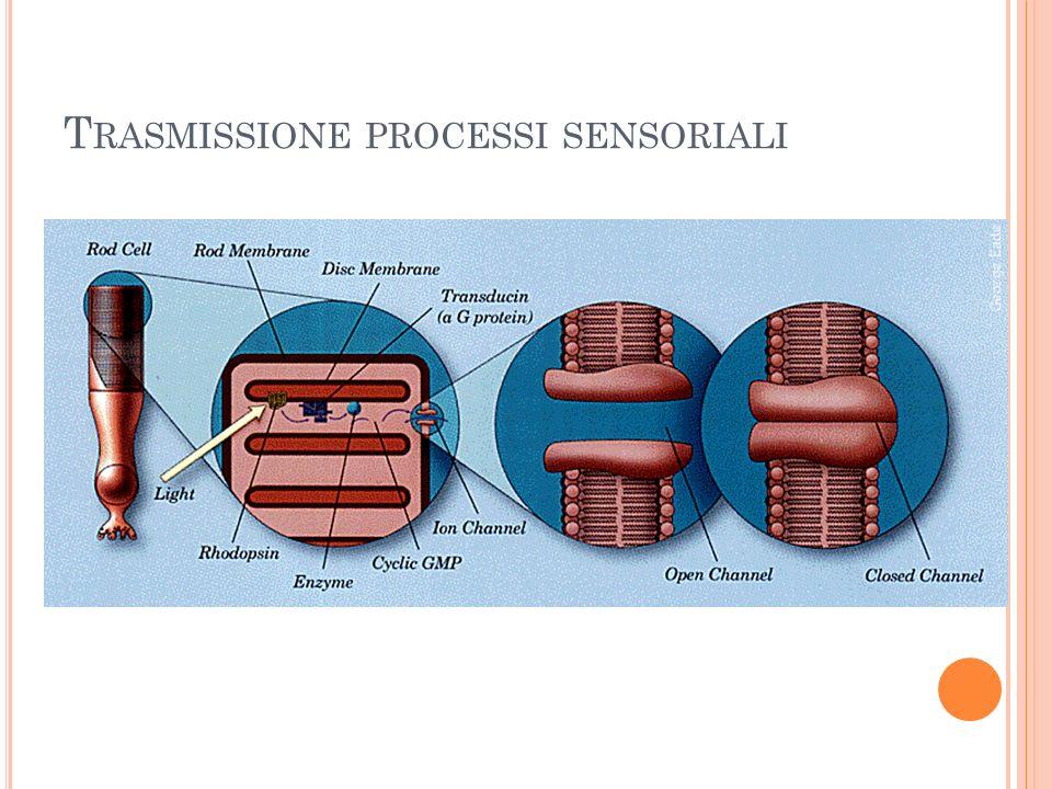 Trasmissione processi sensoriali