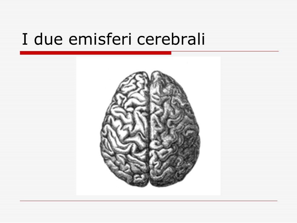 I due emisferi cerebrali