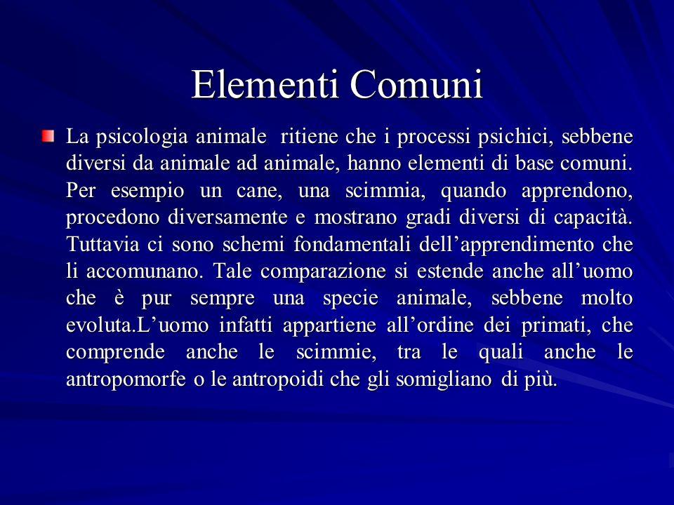 Elementi Comuni