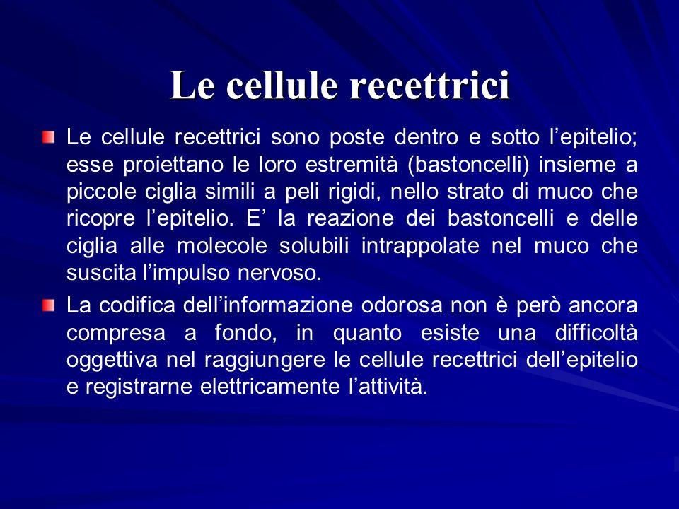 Le cellule recettrici