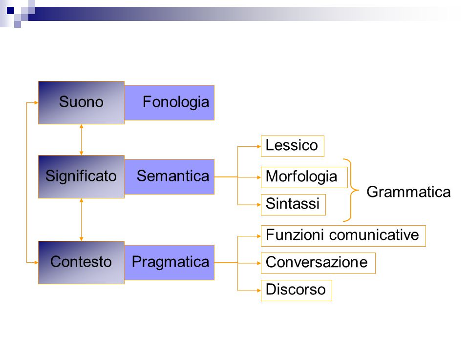 Suono Fonologia. Lessico. Significato. Semantica. Morfologia. Grammatica. Sintassi. Funzioni comunicative.