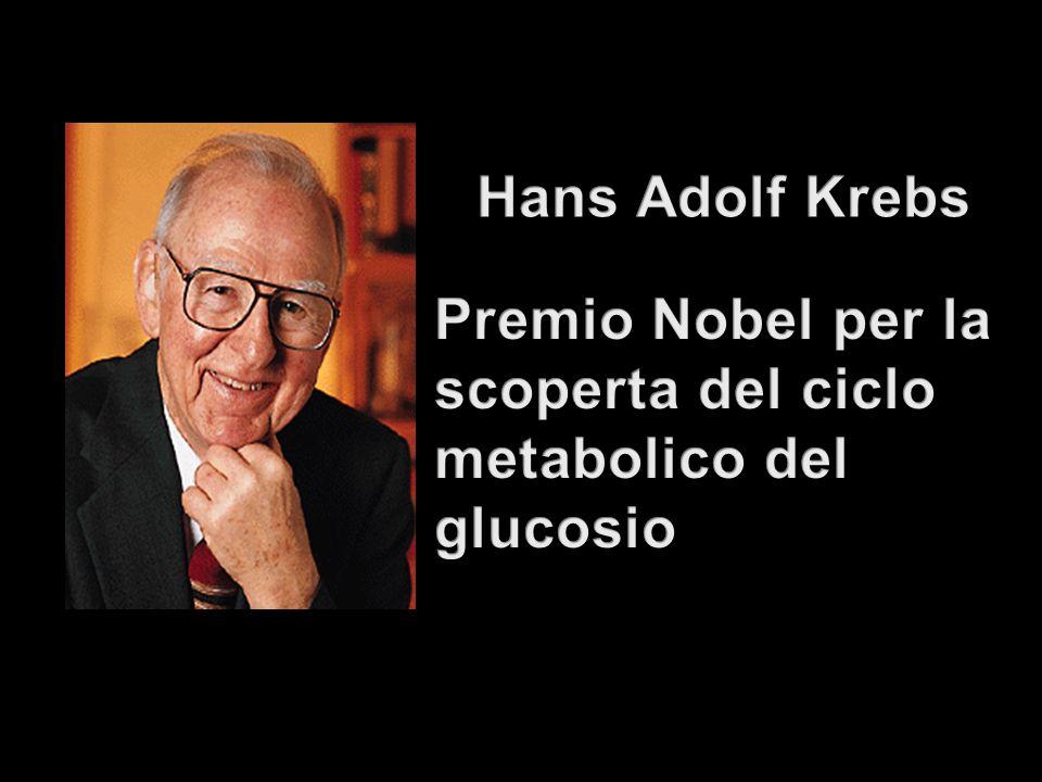 Hans Adolf Krebs Premio Nobel per la scoperta del ciclo metabolico del glucosio