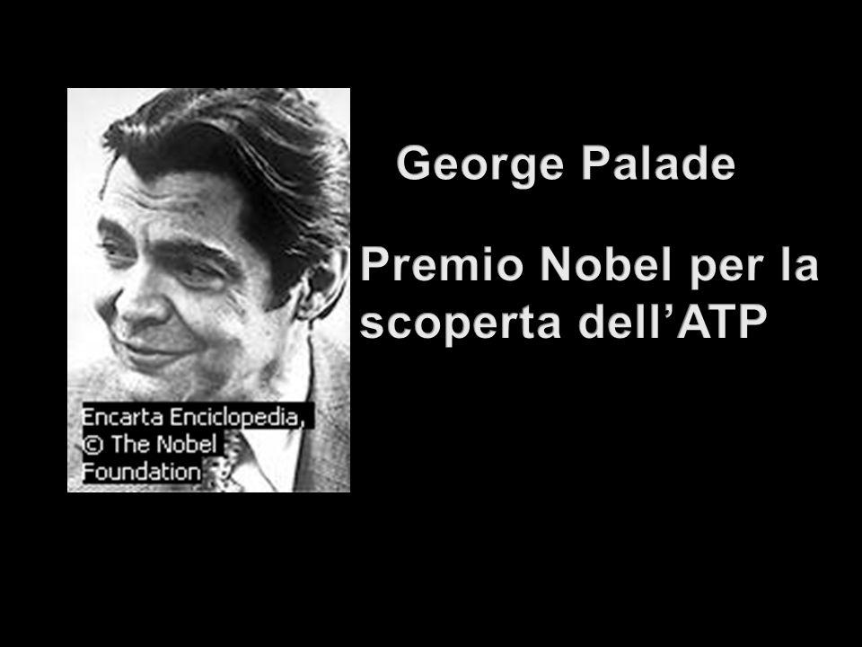 George Palade Premio Nobel per la scoperta dell'ATP