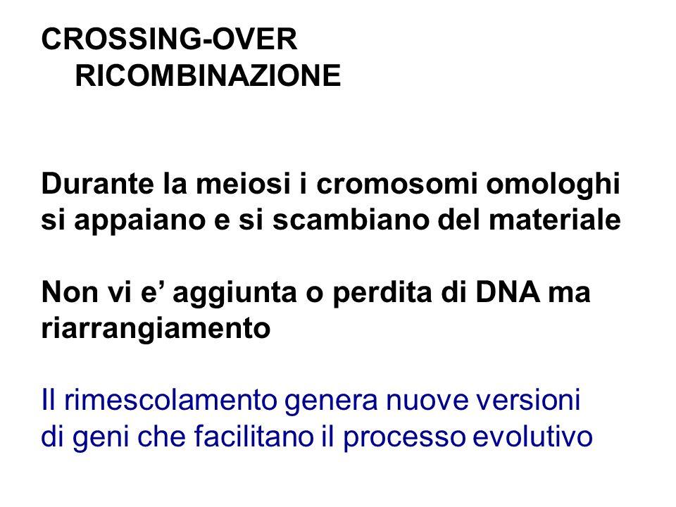 CROSSING-OVER RICOMBINAZIONE. Durante la meiosi i cromosomi omologhi. si appaiano e si scambiano del materiale.