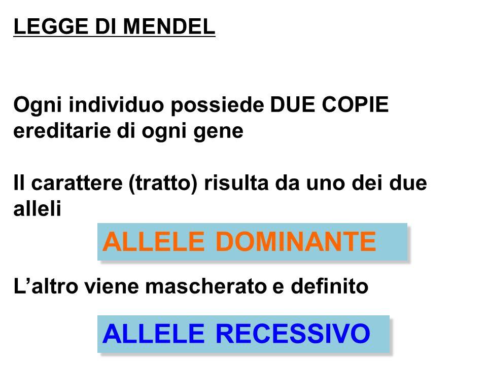 ALLELE DOMINANTE ALLELE RECESSIVO LEGGE DI MENDEL