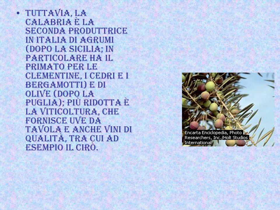 TUTTAVIA, La Calabria è la seconda produttrice in Italia di agrumi (dopo la Sicilia; in particolare ha il primato per le clementine, i cedri e i bergamotti) e di olive (dopo la Puglia); più ridotta è la viticoltura, che fornisce uve da tavola e anche vini di qualità, tra cui ad esempio il Cirò.