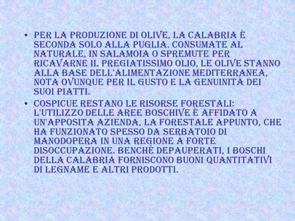 Per la produzione di olive, la Calabria è seconda solo alla Puglia