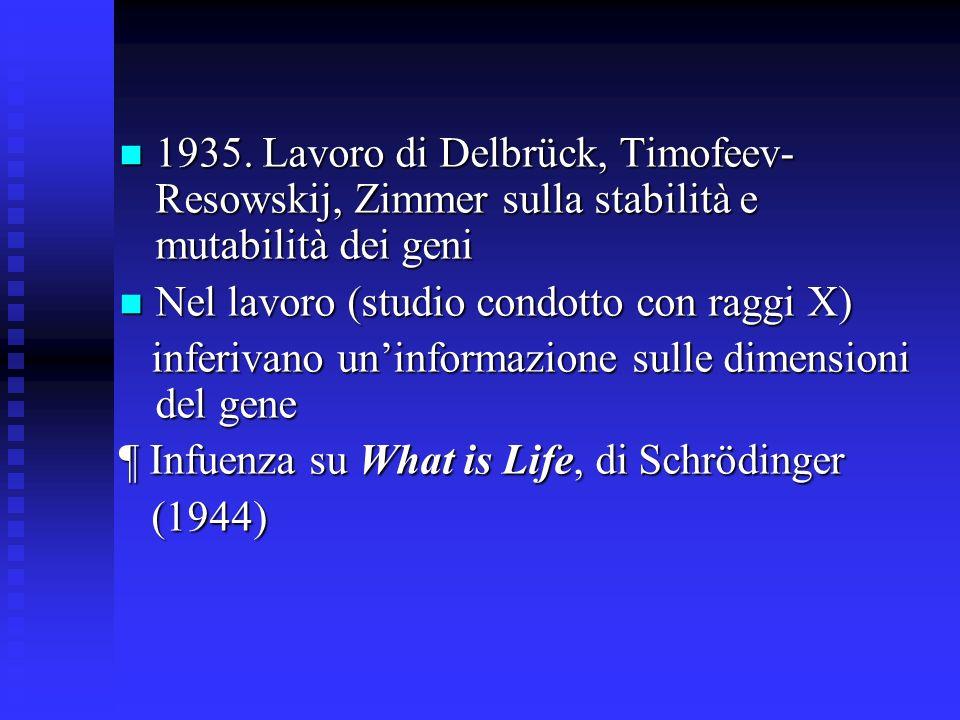 1935. Lavoro di Delbrück, Timofeev-Resowskij, Zimmer sulla stabilità e mutabilità dei geni