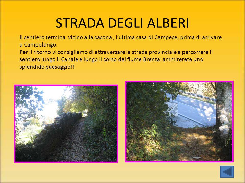 STRADA DEGLI ALBERI Il sentiero termina vicino alla casona , l'ultima casa di Campese, prima di arrivare a Campolongo.