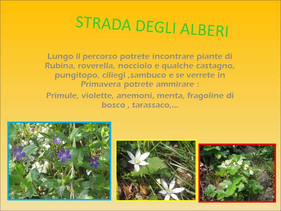 Primule, violette, anemoni, menta, fragoline di bosco , tarassaco,…