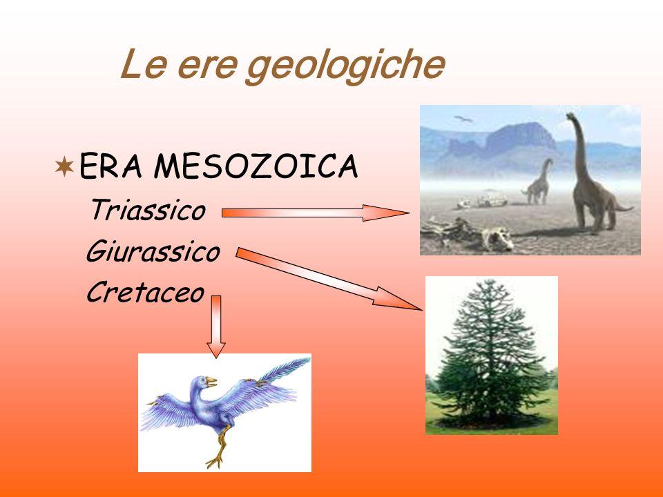 Le ere geologiche ERA MESOZOICA Triassico Giurassico Cretaceo